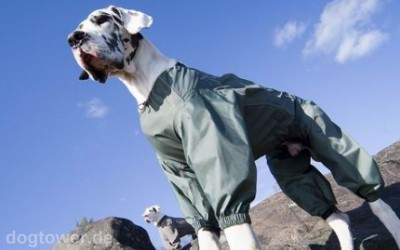 Hundeoverall bis Größe 80(1)