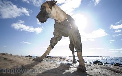 Hundeoverall, wasserundurchlässig und winddicht