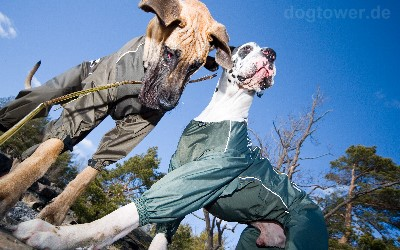 Hurtta Overall für sehr große Hunde