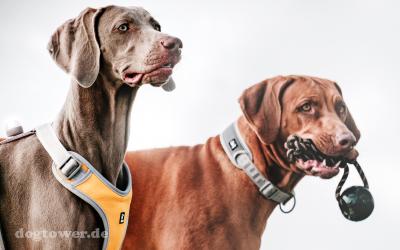Extra stabile Hundespielzeug - ideal für mittelgroße und große Hunde