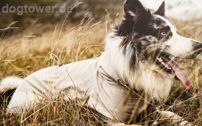 Hurtta Hundeoverall für den Sommer