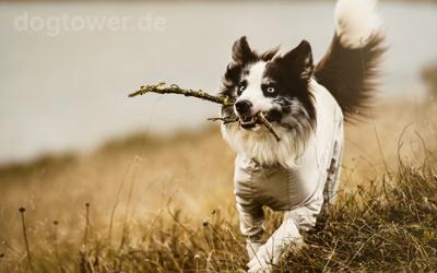 Für Hunde mit Rückenlänge 30cm - 60cm