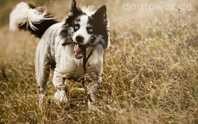 Nutzbar für kleine, mittelgroße und große Hunde