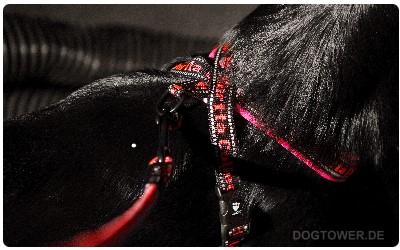 Pro Hundegeschirr mit Reflektoren