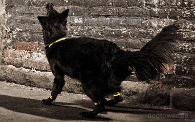 Reflektorset für Hunde, Hurtta