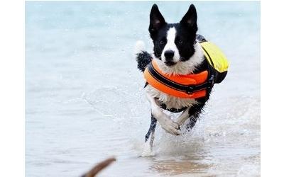 Hundeschwimmweste in gelb/orange
