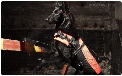Hurttaweste für Hunde