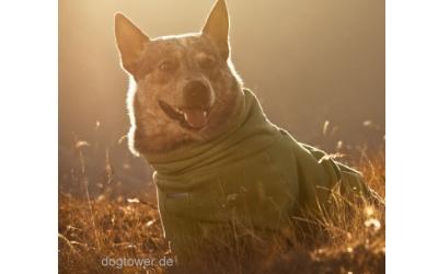 Hundeoverall