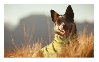 Hundeoverall im Einsatz