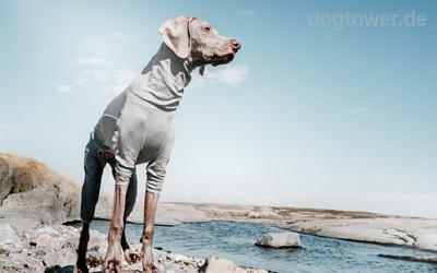 Hundeoverall für kaltes Wetter
