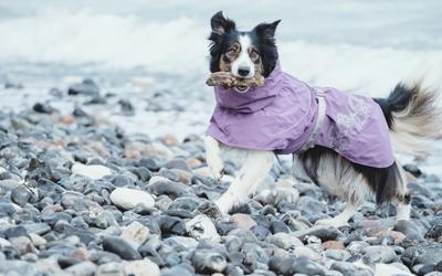 Aluminium-Folienbeschichtung reflektiert die Körperwärme des Hundes