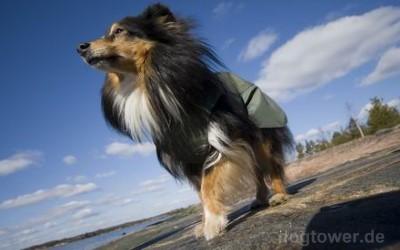 Regenjacke für langhaarige Hunde