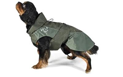 Hundejacke für kleine und mittelgroße Hunde