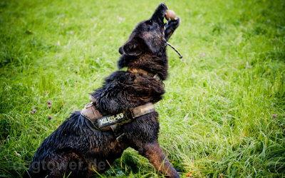 Robustes Hundespielzeug, auch für große Hunde