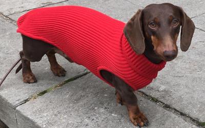iqo Hundepullover 100% Merinowolle, rubinrot
