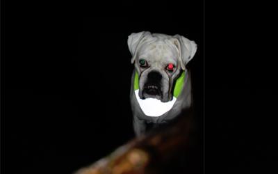 Individuell kürzbar, stufenlos auf den Halsumfang Ihres Hundes einstellbar