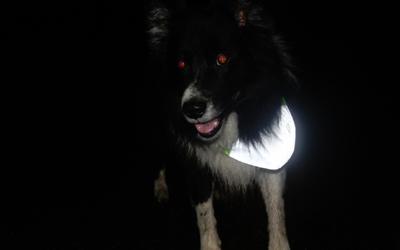Perfekt auch für Langhaar-Hunde einsetzbar