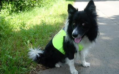 Für langhaarige und kurzhaarige Hunde bestens geeignet