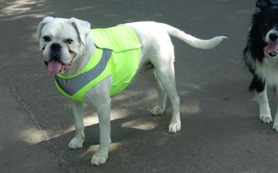 Auch für bullige Hunde Rassen nutzbar, mehrfach individuell einstellbar