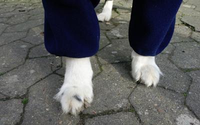 Auf Wunsch fertigen wir die benötigte Beinlänge für Ihren Hund