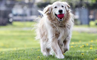 Ideales Hundespielzeug für große Hunde