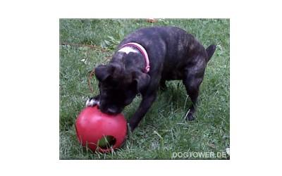 Teaser Ball, Outdoorspielzeug