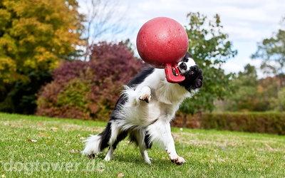 Ideales Outdoorspielzeug für jeden Hund