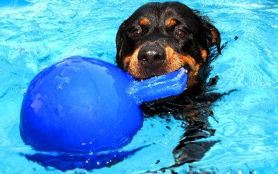 Schwimmfähiges Hundespielzeug