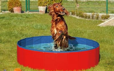 Karlie Doggy Pool, blau/rot
