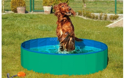 passender Doggy-Pool, grün-blau
