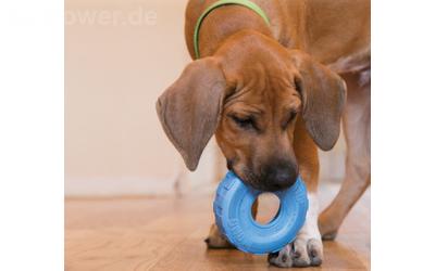 Bespielbar für kleine und große Hunde