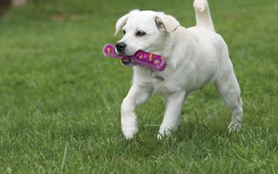 Erhältlich in zwei Größen - ideal für kleine bis große Hunde