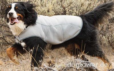 Kühlweste auch für große Hunde einsetzbar