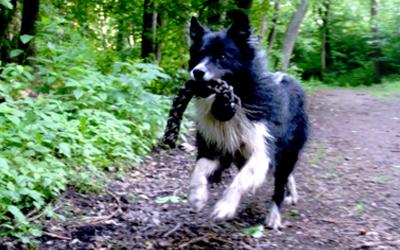 Hurtta Hundespielzeug Outdoor Trainer