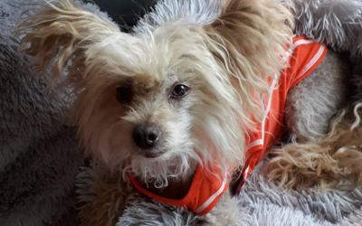EzyDog Rashie UV-Schutz Hundeshirt, orange