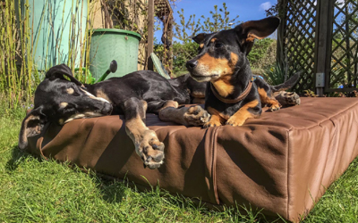 iqo Kunstleder Hundematratze, dunkelbraun