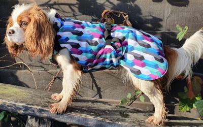 iqo Hundemantel Wintertraum (inkl. Wattierung und Innenfleece), Zapfen