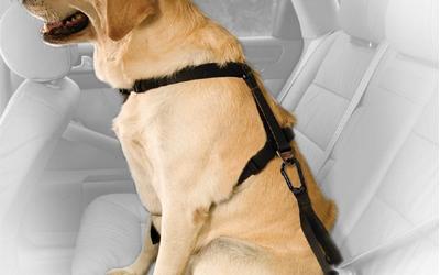Kurgo Sicherheitsgurt Tether mit Karabiner, schwarz