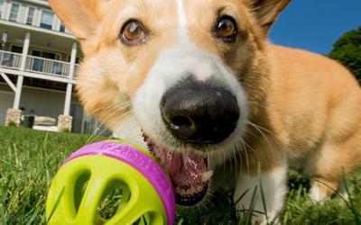 Ein tolles Outdoor-Hundespielzeug für kleine und mittelgroße Hunde
