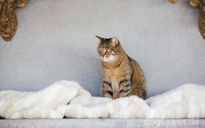 Kuschelweiche Decke in sand für Hunde UND Katzen