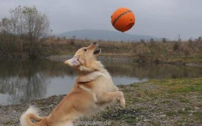 Zwei- Griff- Ball im Einsatz