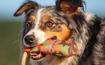 Hundedummy für jede Hunderasse geeignet