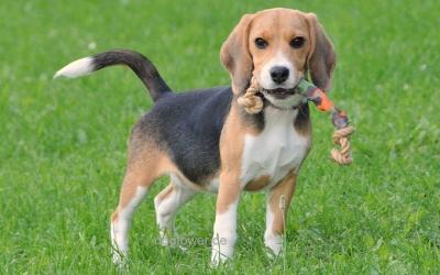 Hundedummy Schnapp
