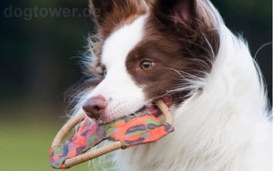 Ideales Wurfspielzeug von Major Dog