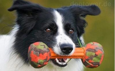 Major Dog Spielzeug für mittelgroße Hunde