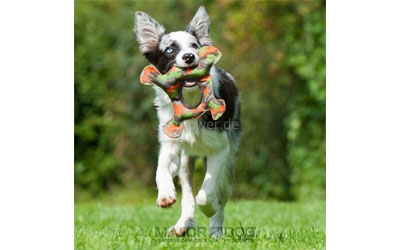 Hundespielzeug Frosch