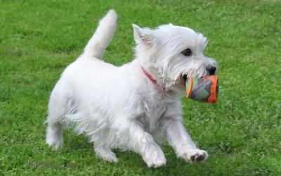 Hundeball Murmel
