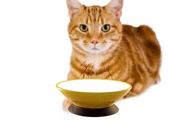 Modern Pet Bowl, rot/red