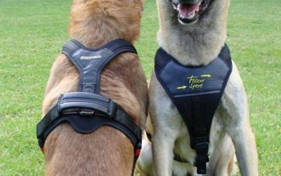 Großer Handgriff zum Halten bei Bedarf Ihres Hundes