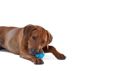 Orka Ball, Petstages Hundeball